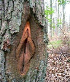 tree-vagina