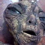 ESCLUSIVA: Foto di un rettiliano