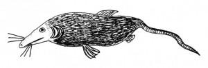 pesce-ratto