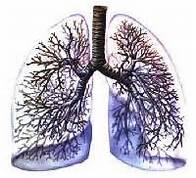 polmoni metallo